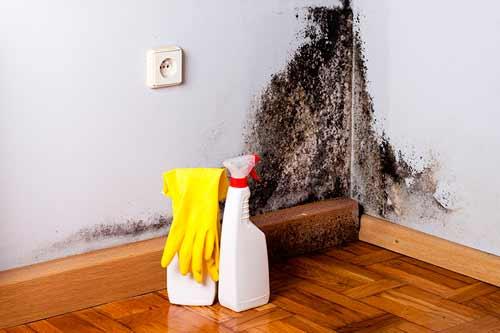 плесень в углу квартиры