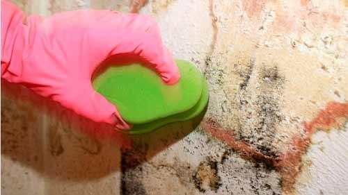 очистка стены от плесени