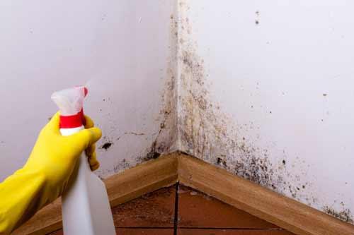 очистка стены от грибка